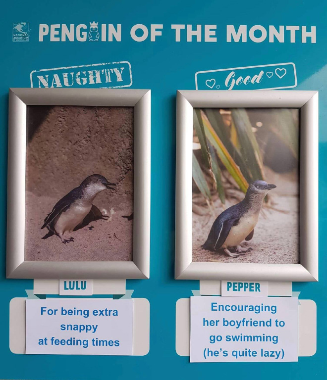Penguin shaming.