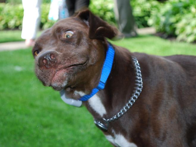 Dog caught mid-sneeze.