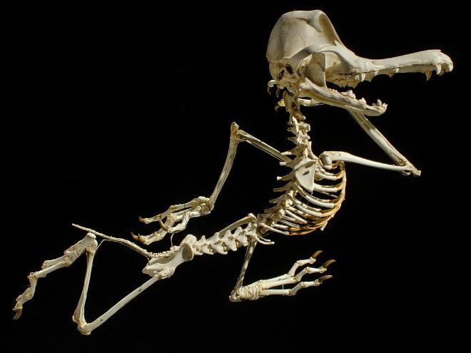 Cartoon skeleton.