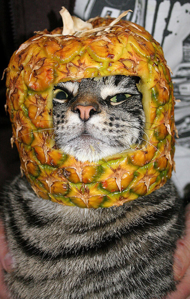 Some cats love to wear fruit hats.