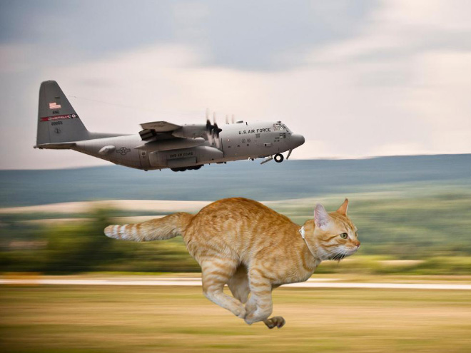 Giant cat vs. military hardware.