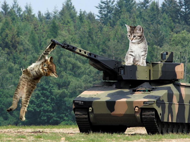 Giant cats vs. military hardware.