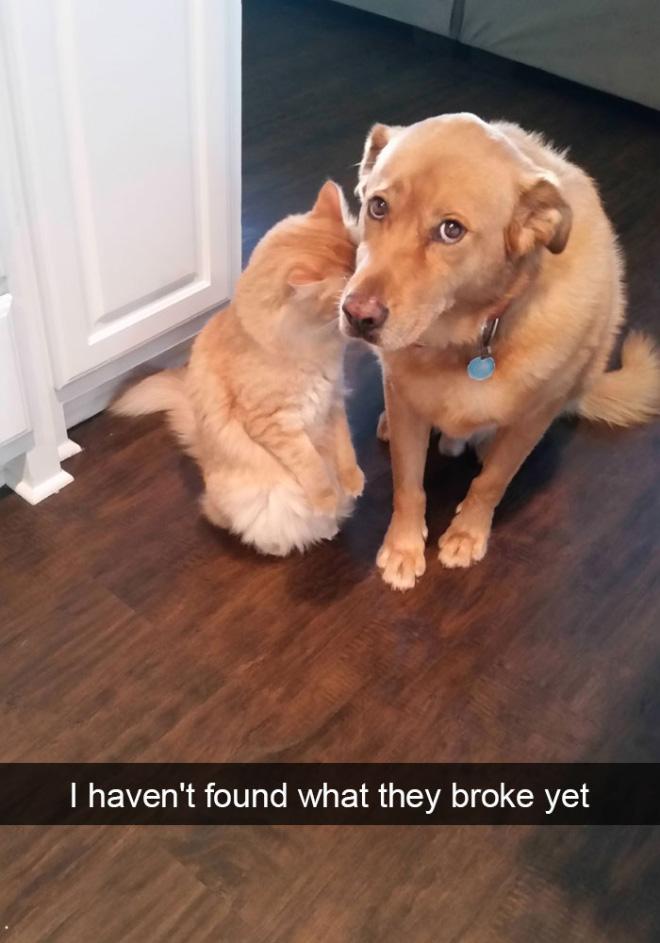 I wonder what they broke...
