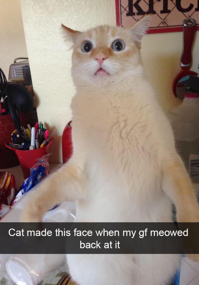 Funny cat snapchat.