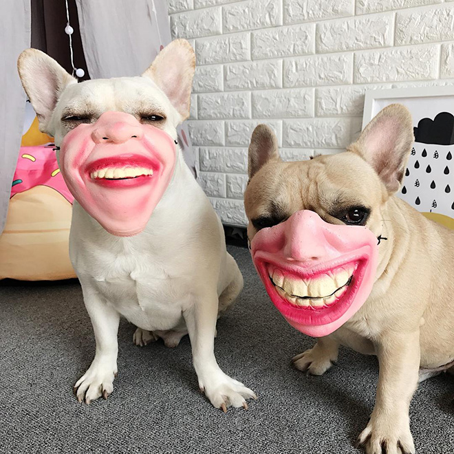 Creepy human face dog mask.