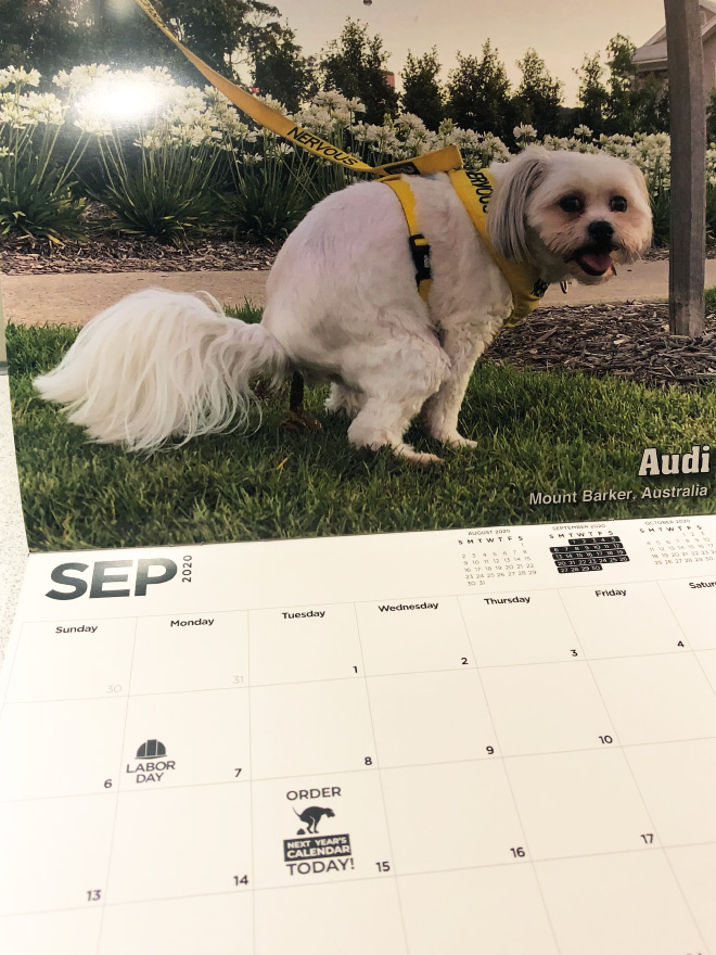 Pooping Pooches 2020 calendar.