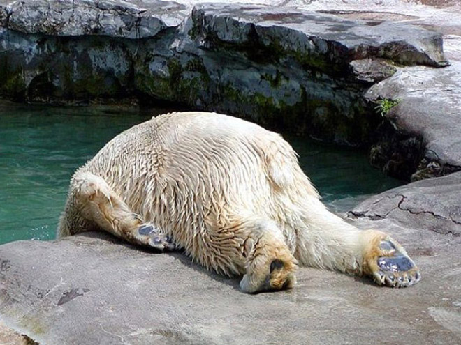 Terribly Hungover Animals