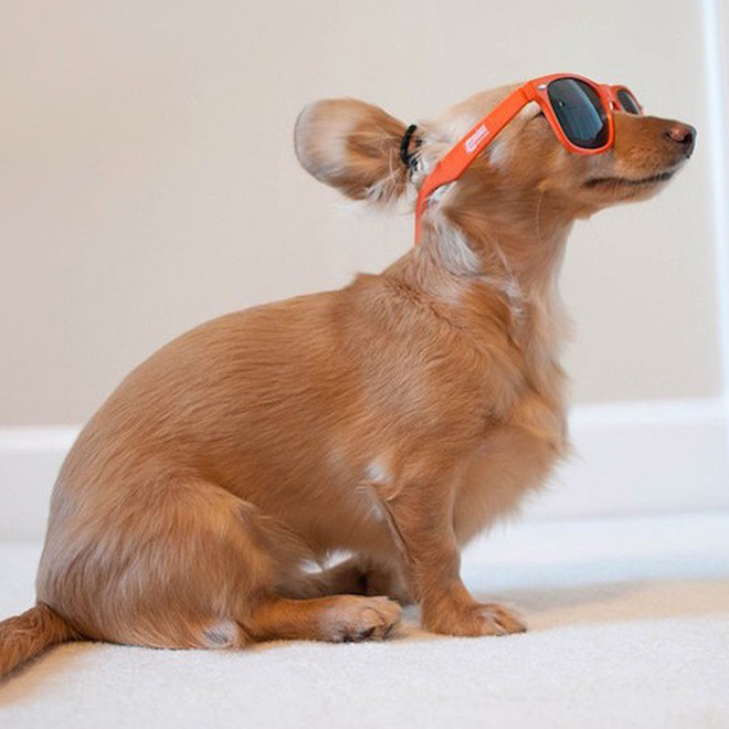 Hipster man bun dog.