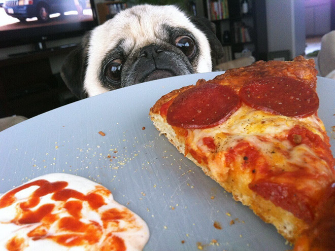 I hope I'll someday find someone who would look at me the way dogs look at food...