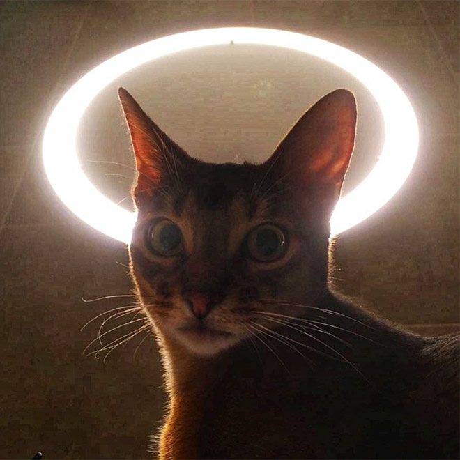 Holy cat.