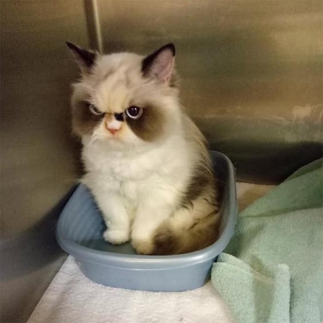 The new Grumpy Cat.