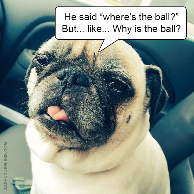 Stoned dog.