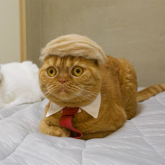 If Donald Trump was a cat...