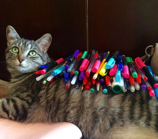 The fine art of putting stuff on a cat.