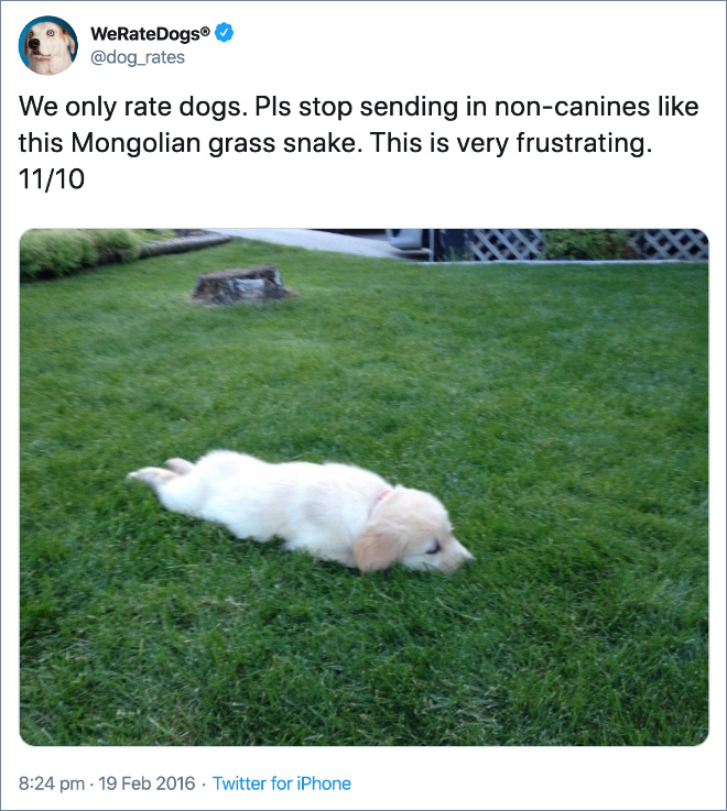 We only rate dogs. Pls stop sending in non-canines like this Mongolian grass snake. This is very frustrating. 11/10