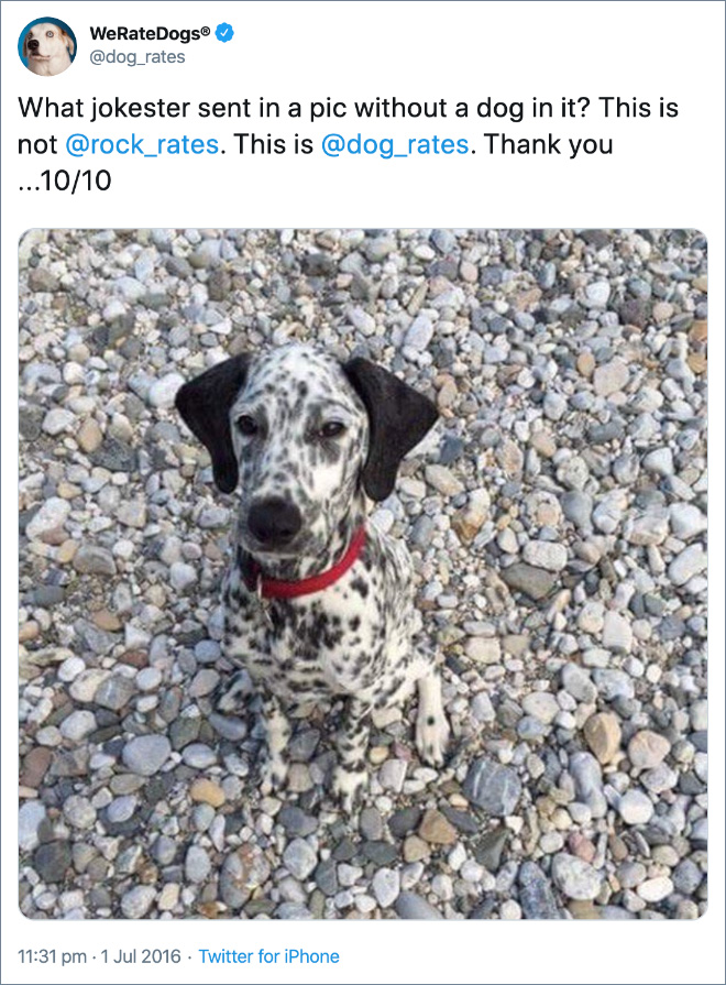 What jokester sent in a pic without a dog in it? This is not @rock_rates . This is @dog_rates . Thank you ...10/10