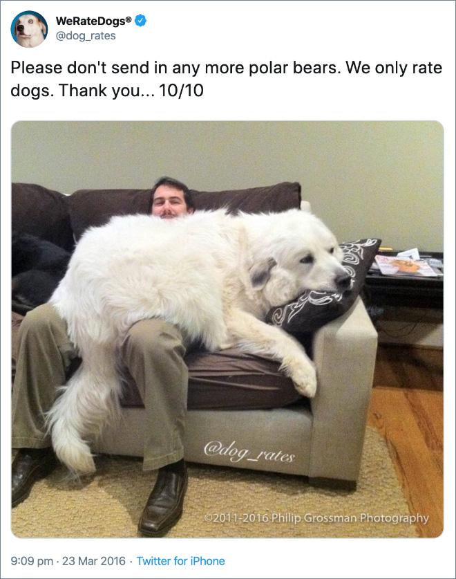 Please don't send in any more polar bears. We only rate dogs. Thank you... 10/10