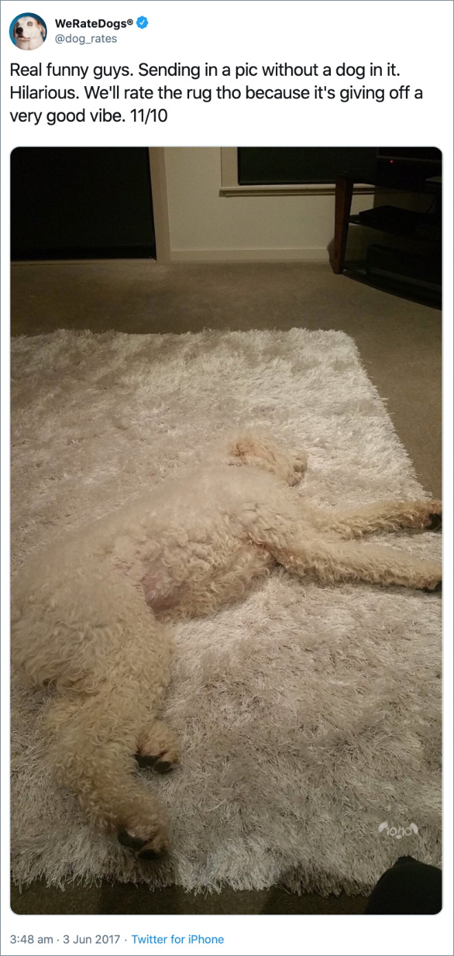 Real funny guys. Sending in a pic without a dog in it. Hilarious. We'll rate the rug tho because it's giving off a very good vibe. 11/10