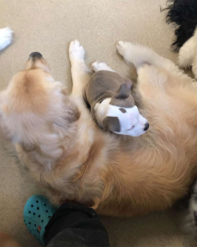 Other dog is the best pillow.