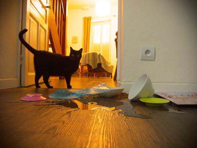 Evil cat.