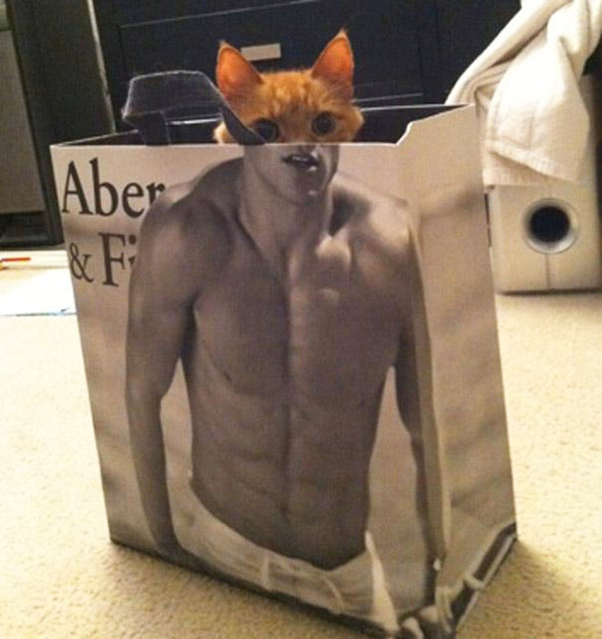 Ripped cat.