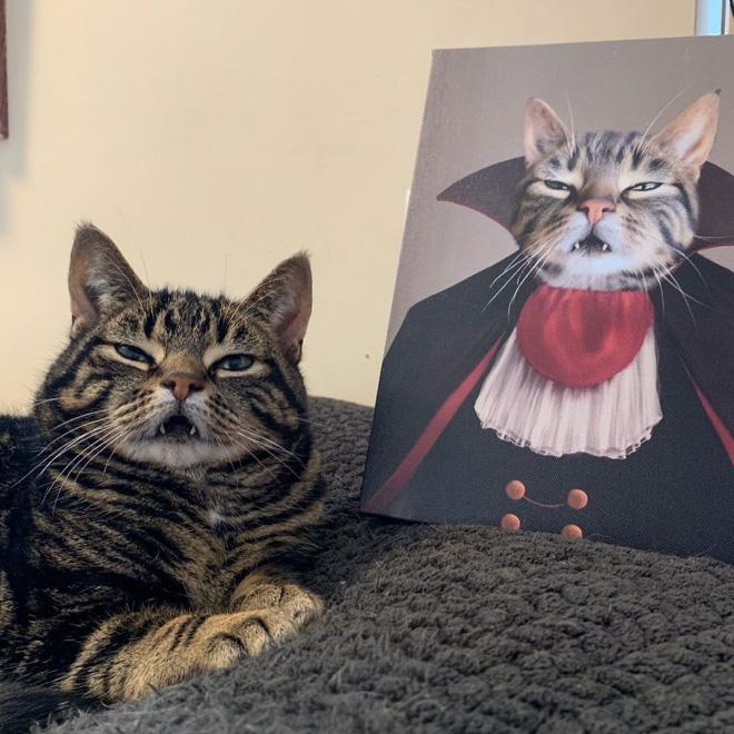 Dracula cat.