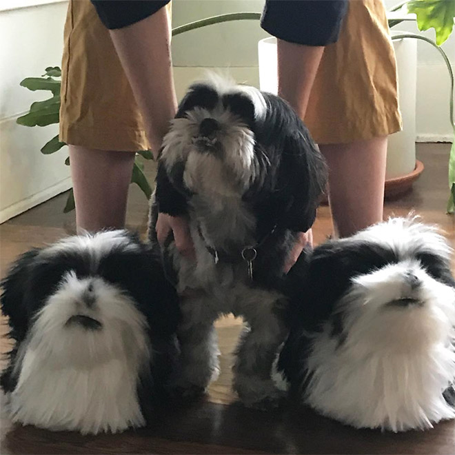 Ultra-realistic pet clone slippers.