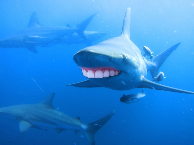 Sharks look so much better with human teeth!