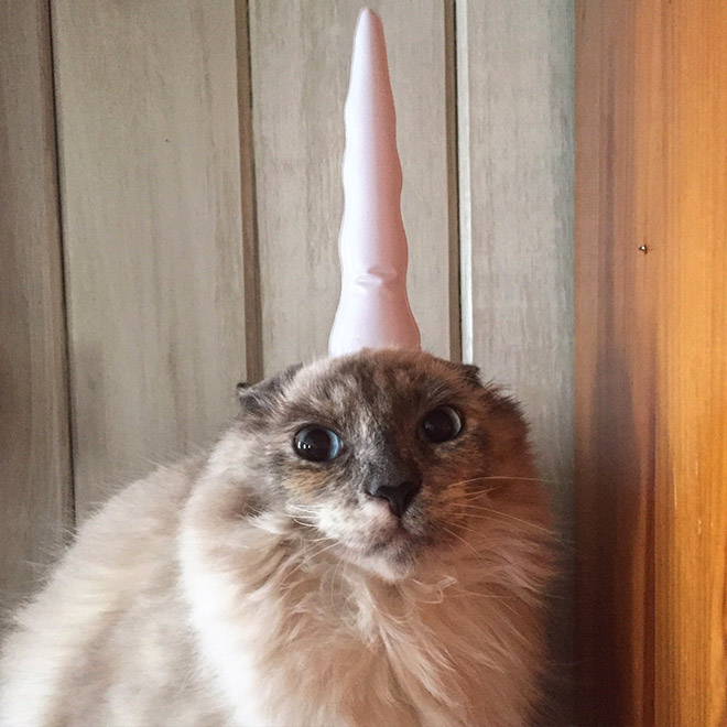 Inflatable unicorn horn for cats.