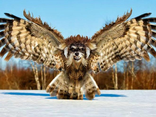 Dogowl or owldog?