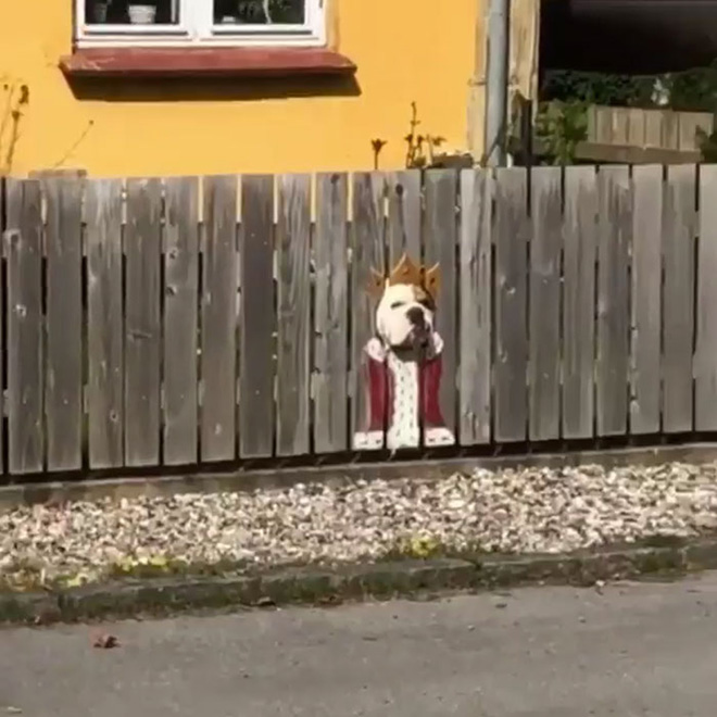 King of the fence.