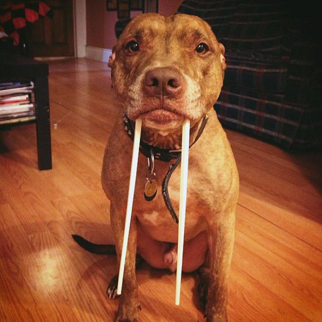 Walrus dog.