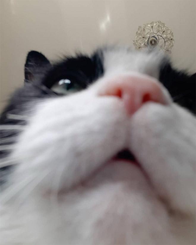 Front camera cat photo.