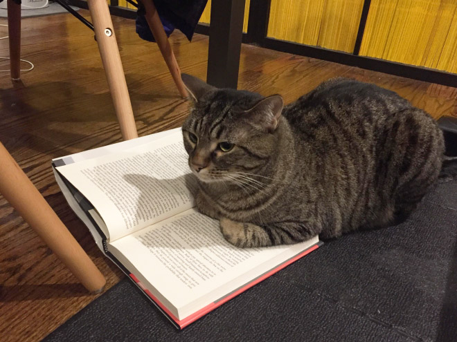 What are you reading? Let me help!