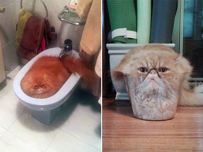 Melting cat.