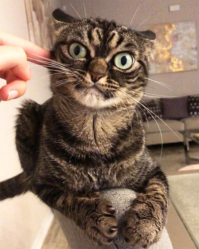 The grumpiest cat ever.
