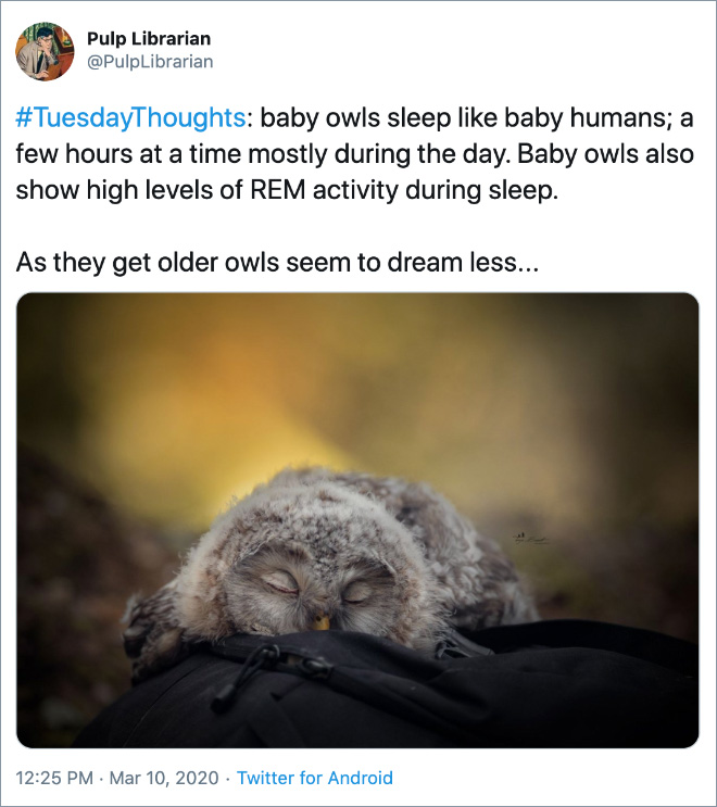 #TuesdayThoughts: baby owls sleep like baby humans; a few hours at a time mostly during the day. Baby owls also show high levels of REM activity during sleep. As they get older owls seem to dream less...