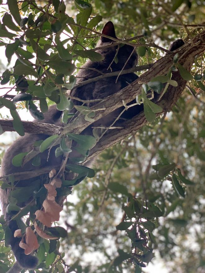 Cat fruit in a tree.