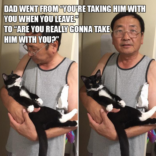 Dad vs. cat.