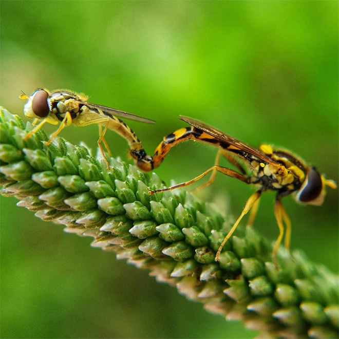 Insect lovemaking.