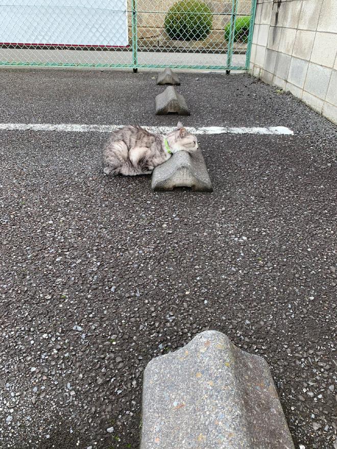 Cats sleeping on parking bumper pillows.