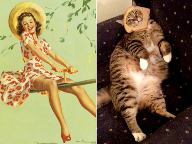 Pinup cat.