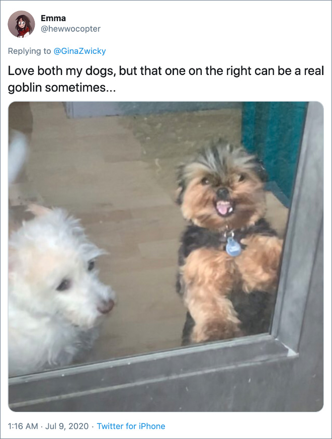 Love both my dogs, but that one on the right can be a real goblin sometimes...