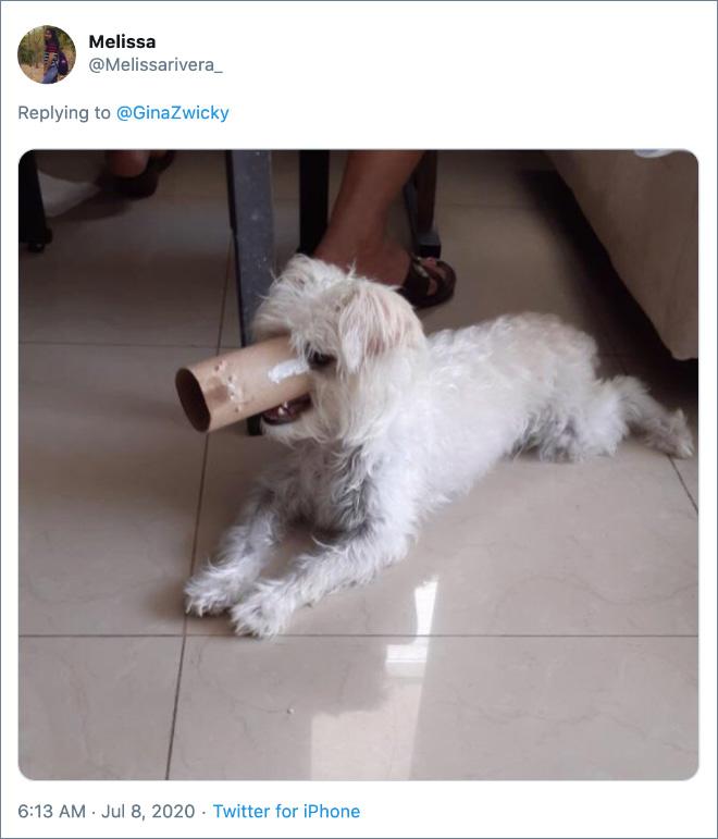 Ugly dog photo.