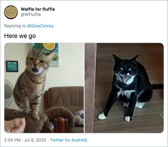 Ugly cat photos.