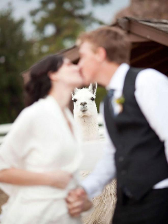 Funny animal photobomb.