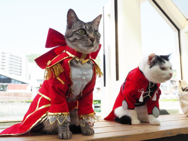 Anime cats.
