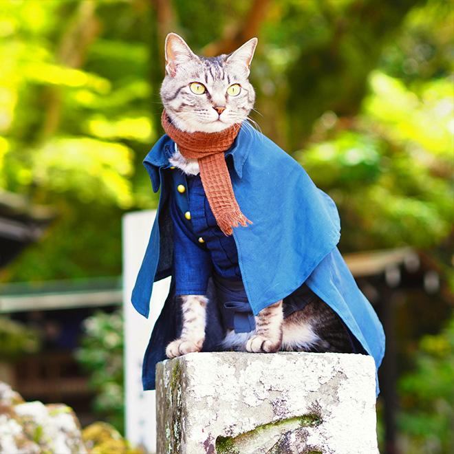Anime cat.