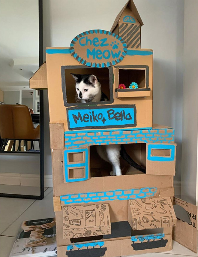 Epic cardboard cat fort.
