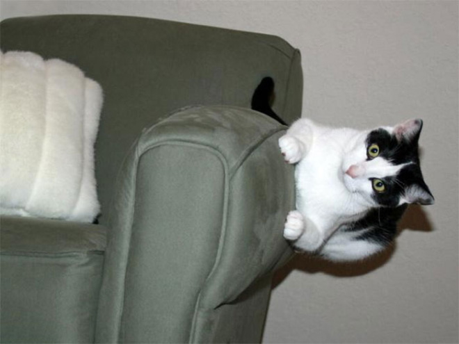 This cat defies the laws of physics.